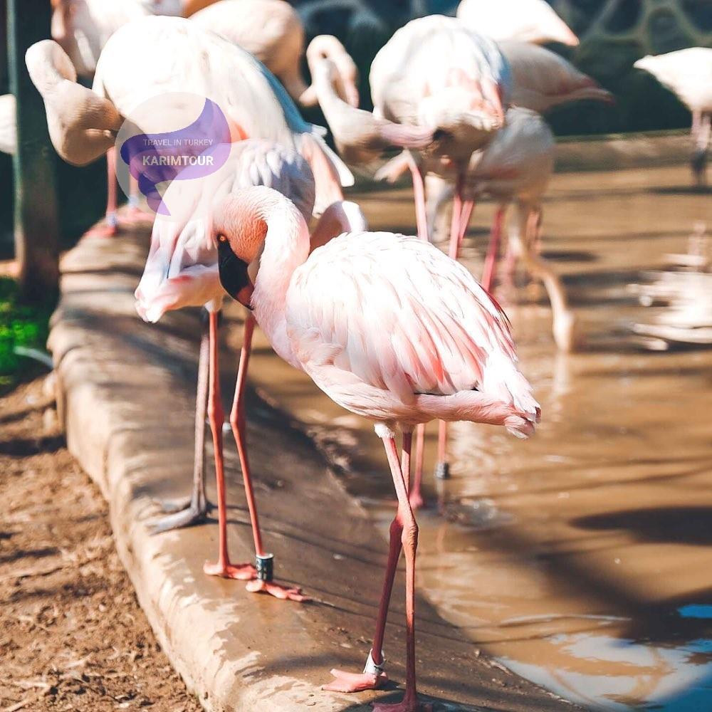 حديقة فاروق للحيوانات