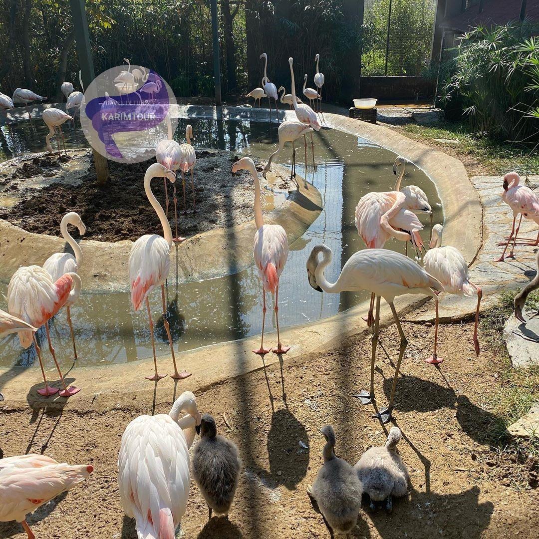 طيور في حديقة داريجا سبانجا