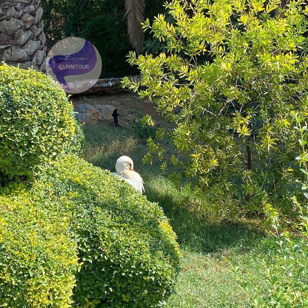 حديقة الطيور سبانجا