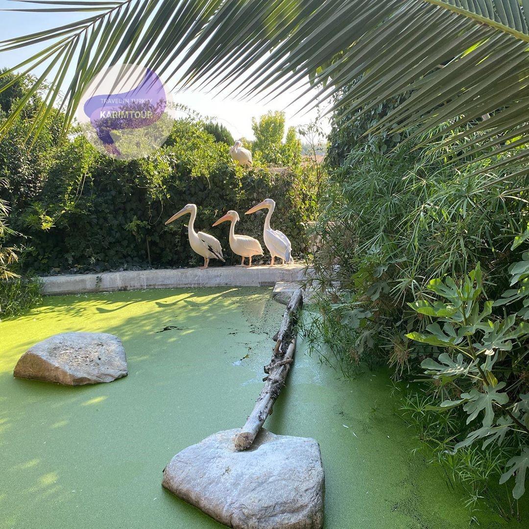 حديقة حيوانات فاروق يالجين