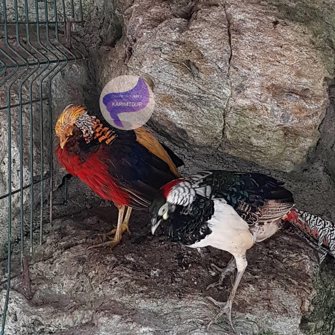 طيور في حديقة داريجا